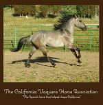 California Vaquero Horse Association