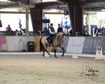 Ponderosa Performance Horses