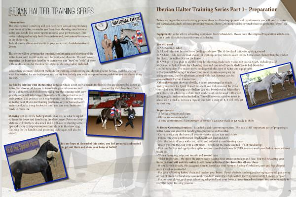 Andalusian Halter Training Part 1