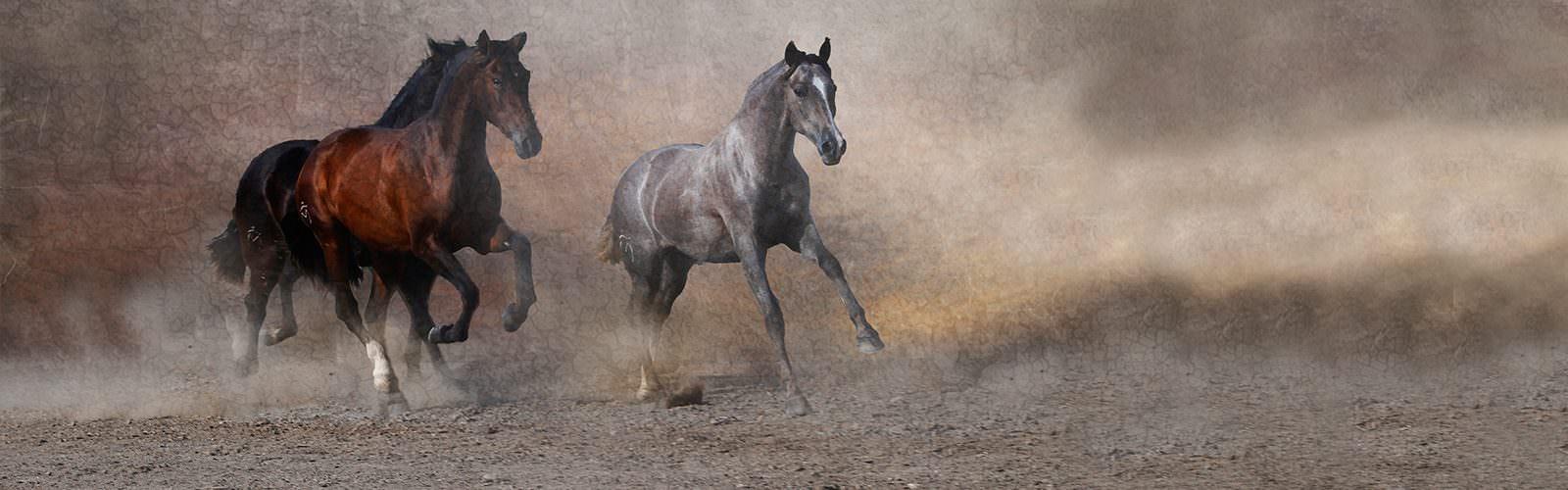 Sales Horses