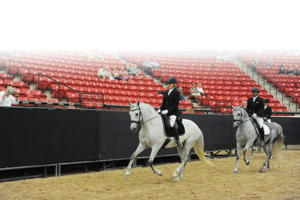 Andalusian World Classes
