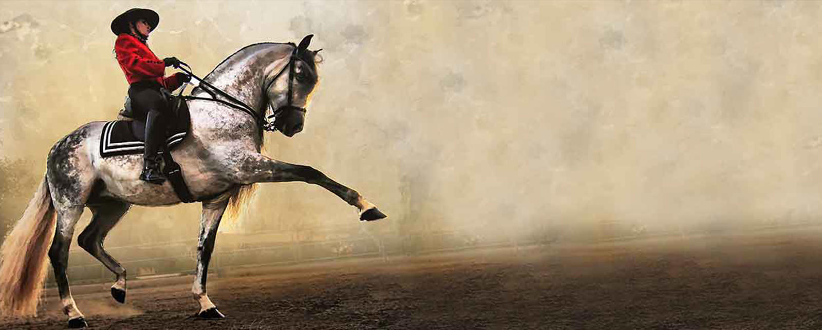 Andausian Horse Shows