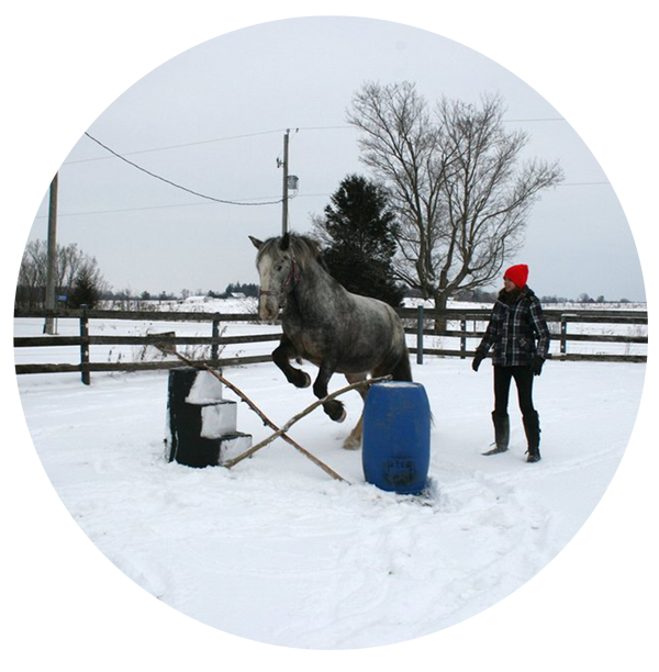 Exercising horses in winter