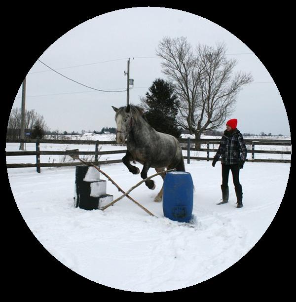 Exercising horses in winter